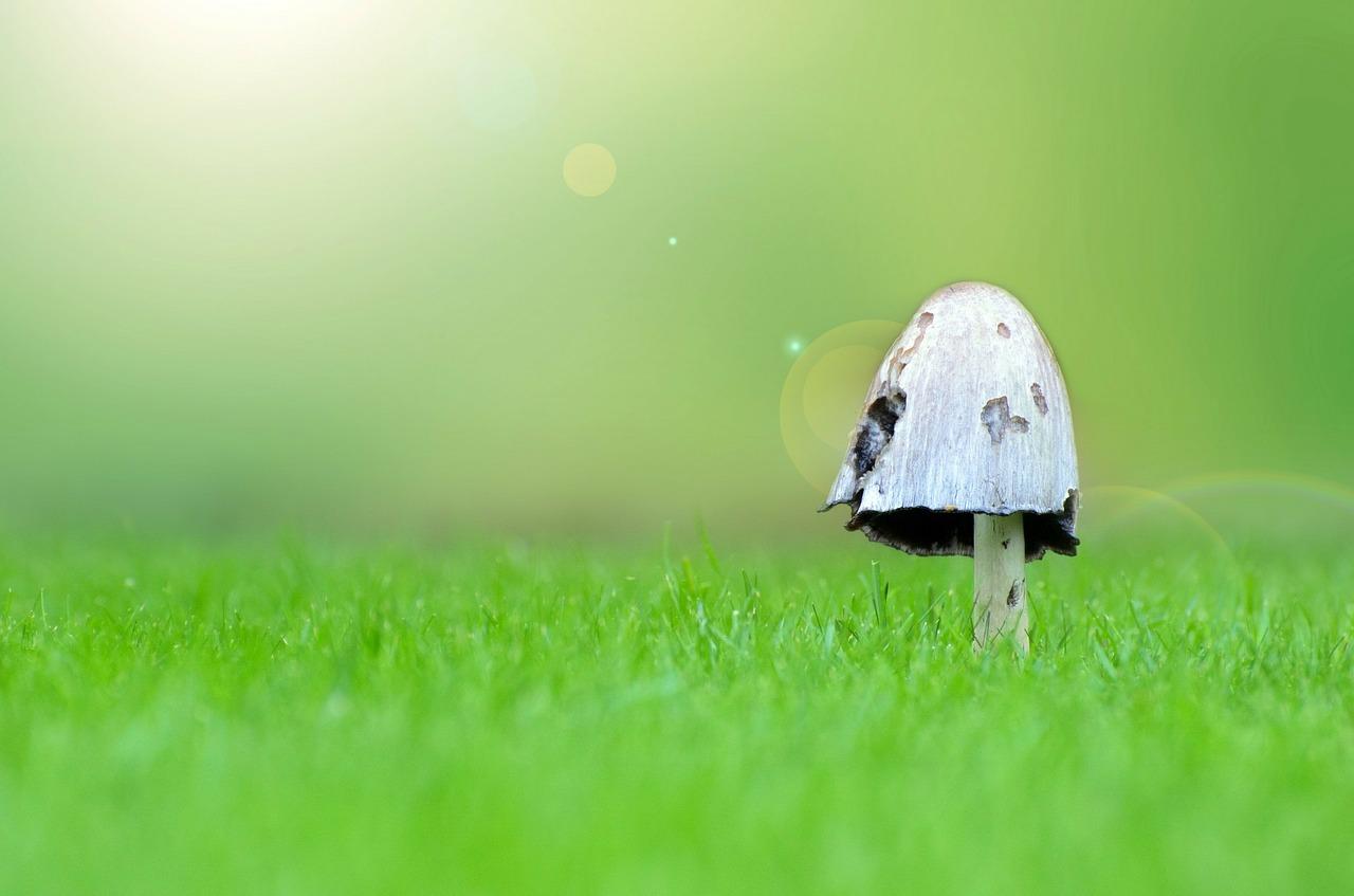 funghi gravidanza
